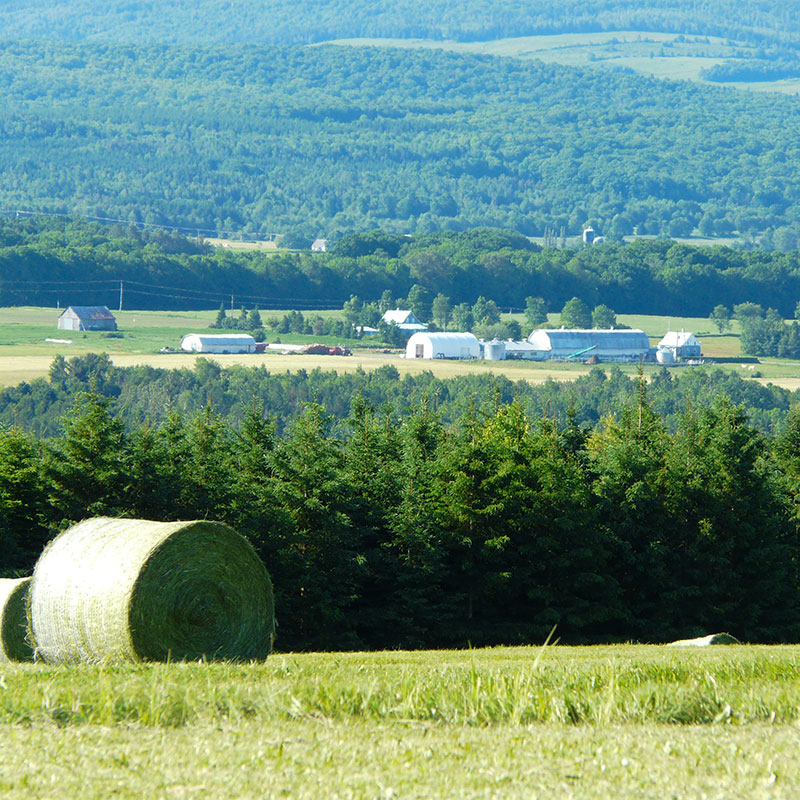 Paysage de montagne et de ferme